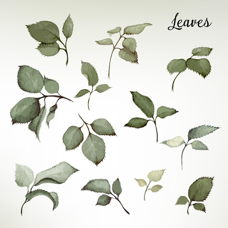 postcard vintage: Leaves, watercolor, can be used as greeting card, invitation card for wedding, birthday and other holiday and  summer background.  Vector illustration.