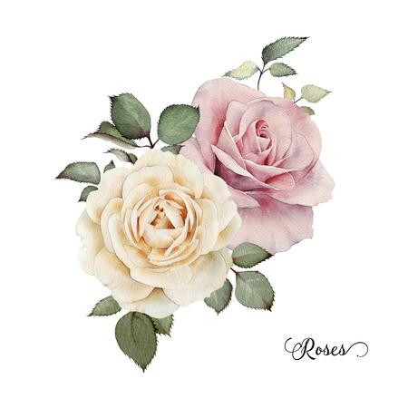 rosas blancas: Ramo de rosas, acuarela, se puede utilizar como tarjeta de felicitaci�n, tarjeta de invitaci�n para la boda, cumplea�os y otras fiestas y el verano de fondo. Foto de archivo