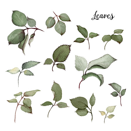 Leaves, watercolor, can be used as greeting card, invitation card for wedding, birthday and other holiday and  summer background