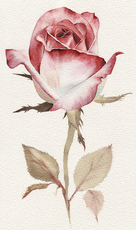 Roses and leaves, watercolor, can be used as greeting card, invitation card for wedding, birthday and other holiday and  summer background