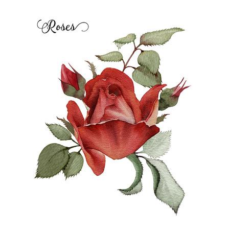 Ramo de rosas, acuarela, se puede utilizar como tarjeta de felicitación, tarjeta de invitación para la boda, cumpleaños y otras fiestas y el verano de fondo Foto de archivo - 42138905