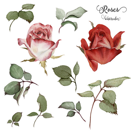 장미와 잎, 수채화, 인사말 카드, 결혼식 초대 카드, 생일 및 다른 휴일과 여름을 배경으로 사용할 수 있습니다