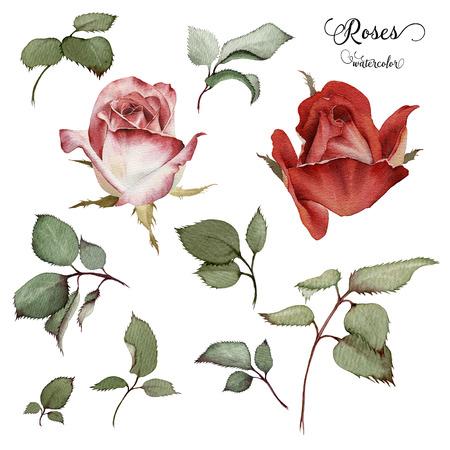 Rozen en bladeren, waterverf, kan worden gebruikt als wenskaart, uitnodigingskaart voor huwelijk, verjaardag en andere vakantie en zomer achtergrond