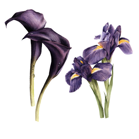 birthday celebration: Callas and Iris, watercolor, can be used as greeting card, invitation card for wedding, birthday and other holiday and  summer background Stock Photo