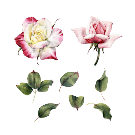 Roses and leaves, watercolor, can be used as greeting card, invitation card for wedding, birthday and other holiday and  summer background.  Archivio Fotografico