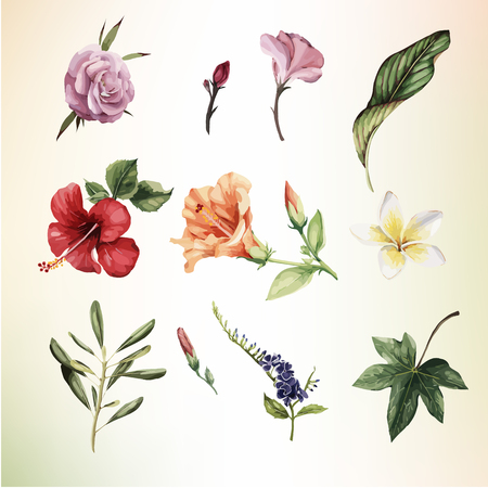 Tropical flowers, watercolor. Vector illustration