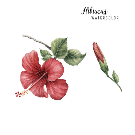 Tropical hibiscus flowers 스톡 콘텐츠