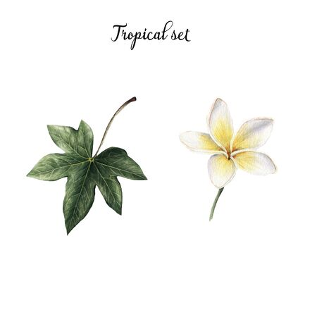 Tropical set, plumeria Stok Fotoğraf - 96729574