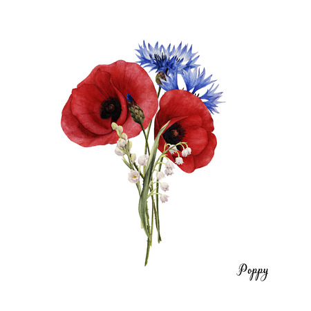 Bouquet of poppys, watercolor, can be used as greeting card, invitation card for wedding, birthday and other holiday and summer background. Stok Fotoğraf