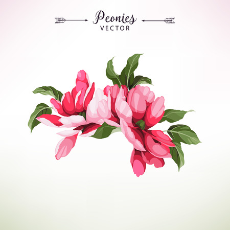 Bouquet of peonies. Vector illustration.
