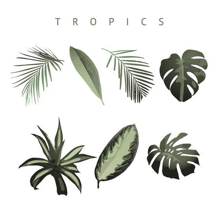 Tropical set. Vector Фото со стока - 124953857
