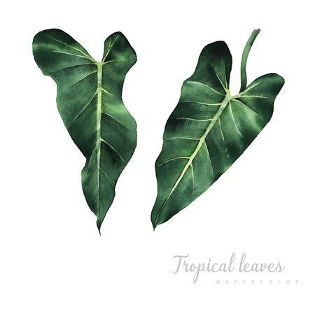 Tropical plants. Watercolor