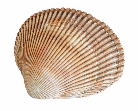 mollusk: shell mollusk