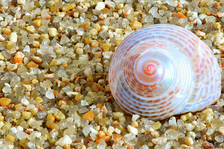 mollusk: sea mollusk Stock Photo