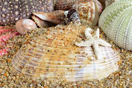 mollusk: shell. sea mollusk