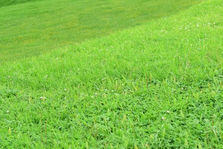 sward: Background of green grass. Green grass texture Stock Photo