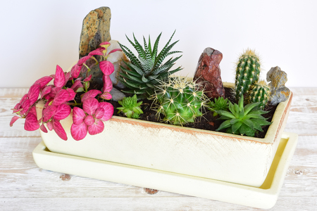 peyote: Potted plants. room flowers in pot