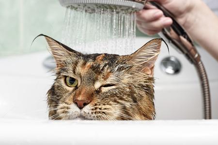 재미 있은 고양이. 젖은 고양이