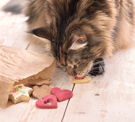 catling: Cat eats on the table Stock Photo