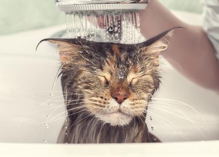 Wet cat in the bath Standard-Bild