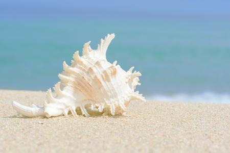 Shell. Sea mollusk. Shell on sand at beach and bokeh sea