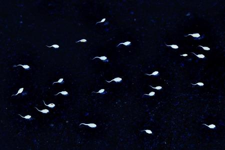 Spermatozoa on dark background. White sperm illustration
