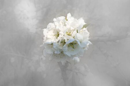 White flower on blurred background. Spring background Banco de Imagens