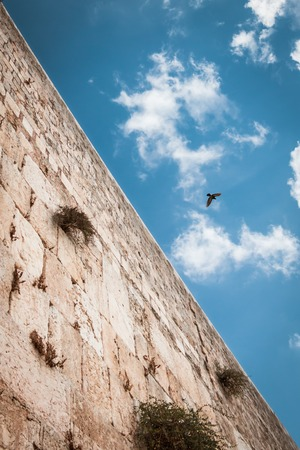 5050 composition, to show half heaven half earth. Wailing wall with blue sky on the background, and bird in the sky. Jerusalem, Israel Stock Photo