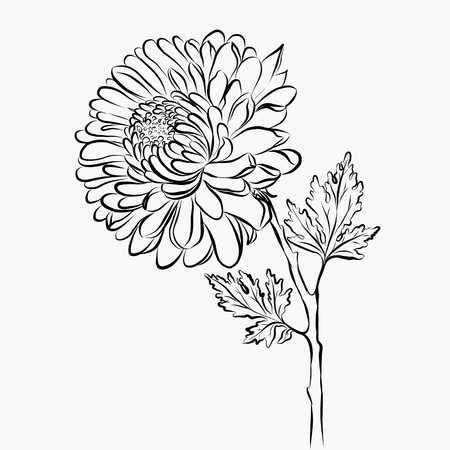 Lovely Isolated big Flower sketch graphical paint 일러스트