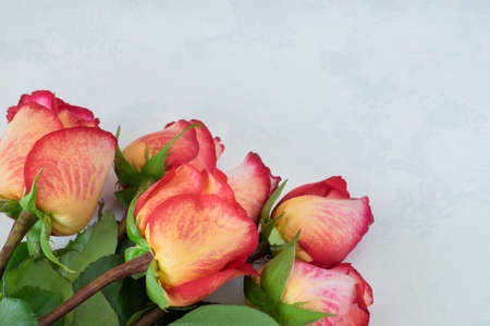 A bouquet of beautiful yellow-red roses lies on a light background with the texture of plaster. Congratulations, gift concept. Horizontal orientation, selective focus. Imagens