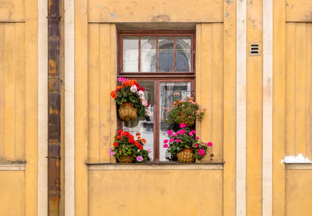 The window of an old apartment building, decorated with flower pots with flowering house plants. Home flowering, houseplants. Horizontal orientation, selective focus.