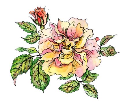 Yellow rose with bud and leaves, hand drawing on white background. Rose yellow floribunda, watercolor illustration with a contour. 版權商用圖片