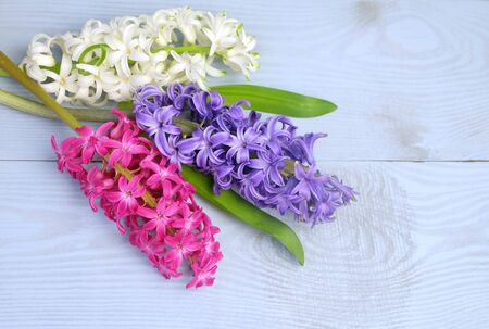 Bouquet of hyacinths on a blue wooden background, spring floral background, top view, copy space. Reklamní fotografie