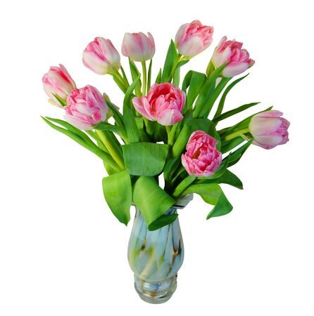 Pink terry tulips in a motley glass vase isolated on white background.