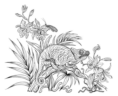 Chameleon on a fallen tree trunk among orchids in the jungle, black and white contour graphics, coloring page for adults and children. 矢量图像