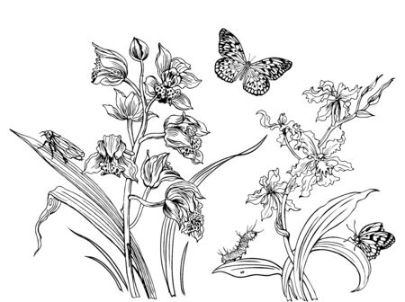 Orchids and insects: butterflies, caterpillar and grasshopper, contour black and white drawing, coloring book for adults and children.