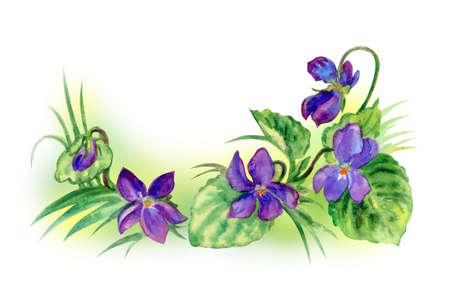 Forest violets in the grass, watercolor painting on a white background. Banque d'images