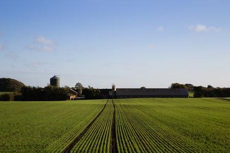 acreage: Photograph of a farmhouse and a field in Jutland region in Denmark. Stock Photo