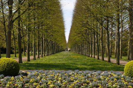 A photograph of an alley of linden trees in the French Garden - Franzoesischer Garten - in Celle, Germany. Stock Photo