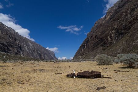 death valley: Photograph of a dead cow on the Santa Cruz Trek in Peru.