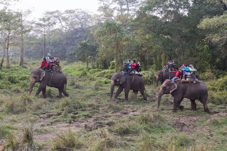 mahout: Chitwan National Park, Nepal - November 30, 2014: Tourists on an elephant ride. Editorial