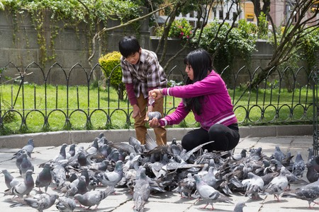 pidgeon: La Paz, Bolivia - October 24, 2015: People feeding pidgeon on Plaza Murillo.