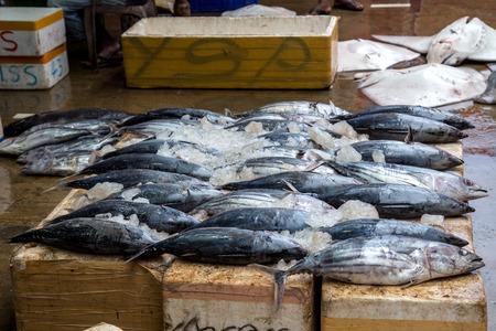 Early morning fish market in Negombo, Sri Lanka
