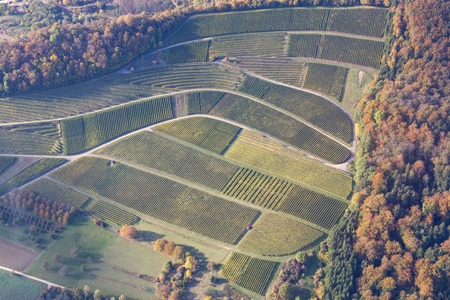 Aerial view of vineyards during autumn in Baden-Wurttemberg in Southern Germany.