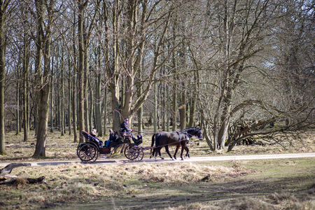 Klampenborg, Denmark - March 25, 2017:  A horse-drawn carriages inside the Deer Park Dyrehaven. Dyrehaven is a forest park north of Copenhagen.