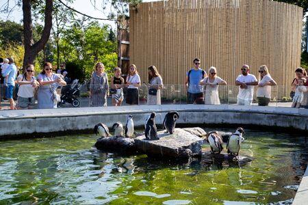Frederiksberg, Denmark - August 25, 2019: People looking at group of penguins in Copenhagen Zoo. Editorial