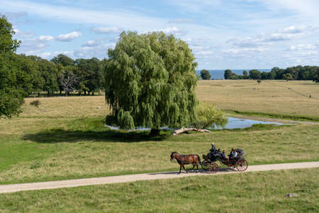 Horse-drawn carriage in Dyrehaven in Copenhagen