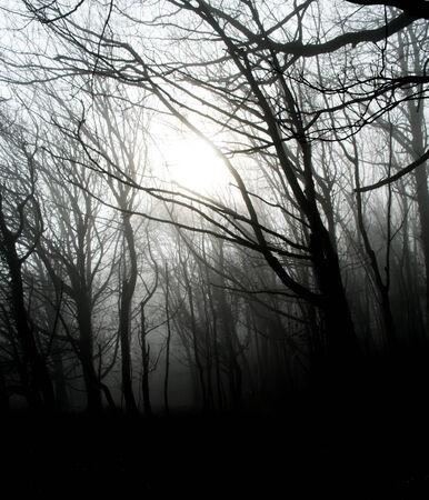 dorset: Early morning mist in Dorset