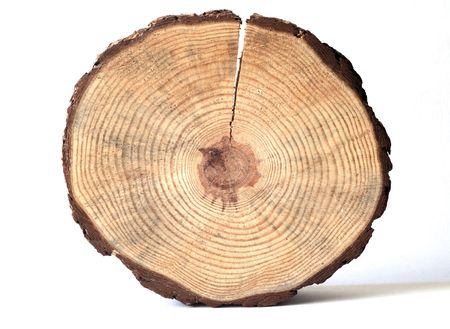 wooden circle with a split cut of the log Standard-Bild