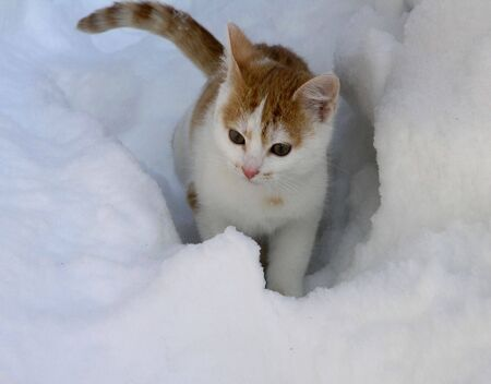little red and white cat sitting in the snowdrift
